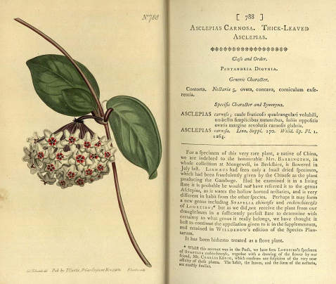 William Curtis - Botanical magazine. 1805
