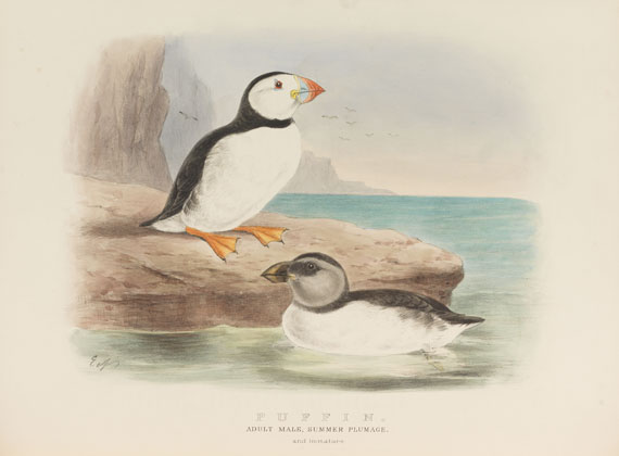 Edwin Carton Booth - Rough notes on the birds in the British Islands. 3 Bde. - Weitere Abbildung