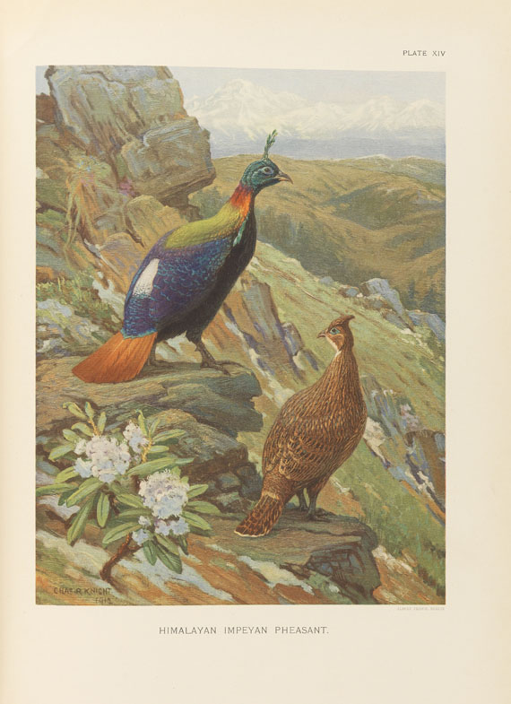 William Beebe - A monograph of the pheasants. 4 Bde. - Weitere Abbildung