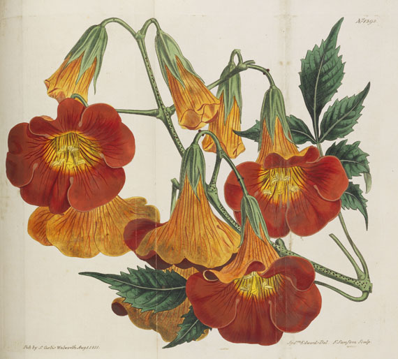 William Curtis - Botanical Magazine, Bd 1 - 53. 40 Bde. - Weitere Abbildung